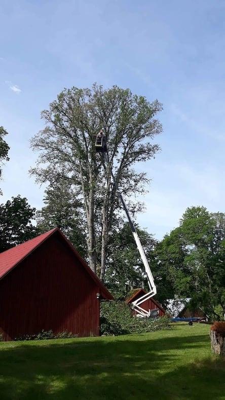 Teleskooptõstuk Dino 210XT ohtlike puude langetamisel