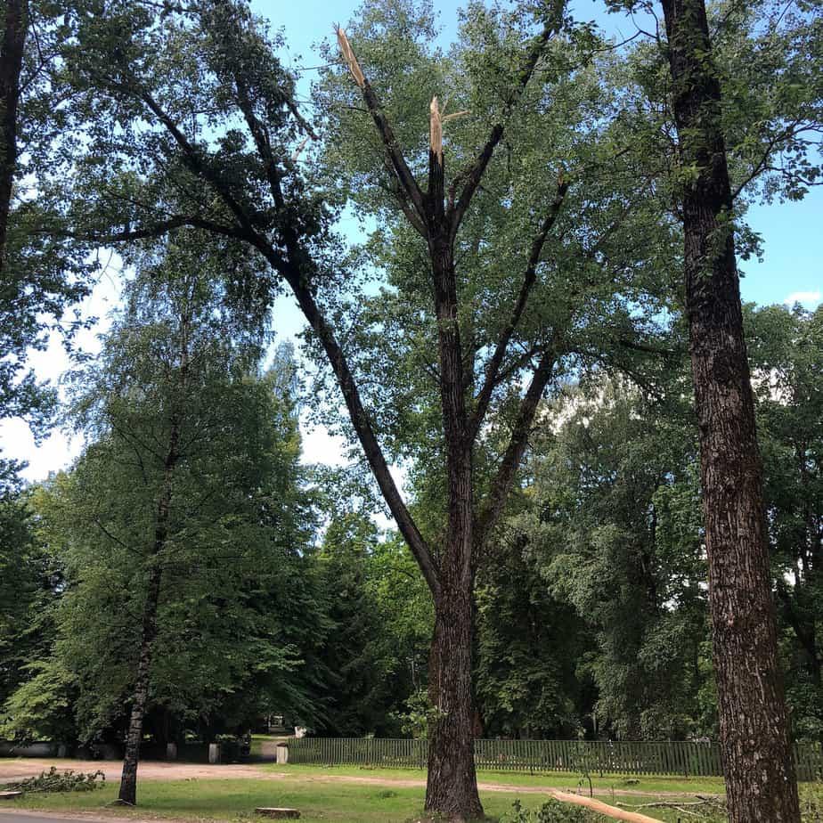 Ohtlikud puud