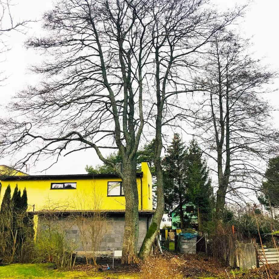 Puude hindamine. Mida me hindame ja kuidas see käib?