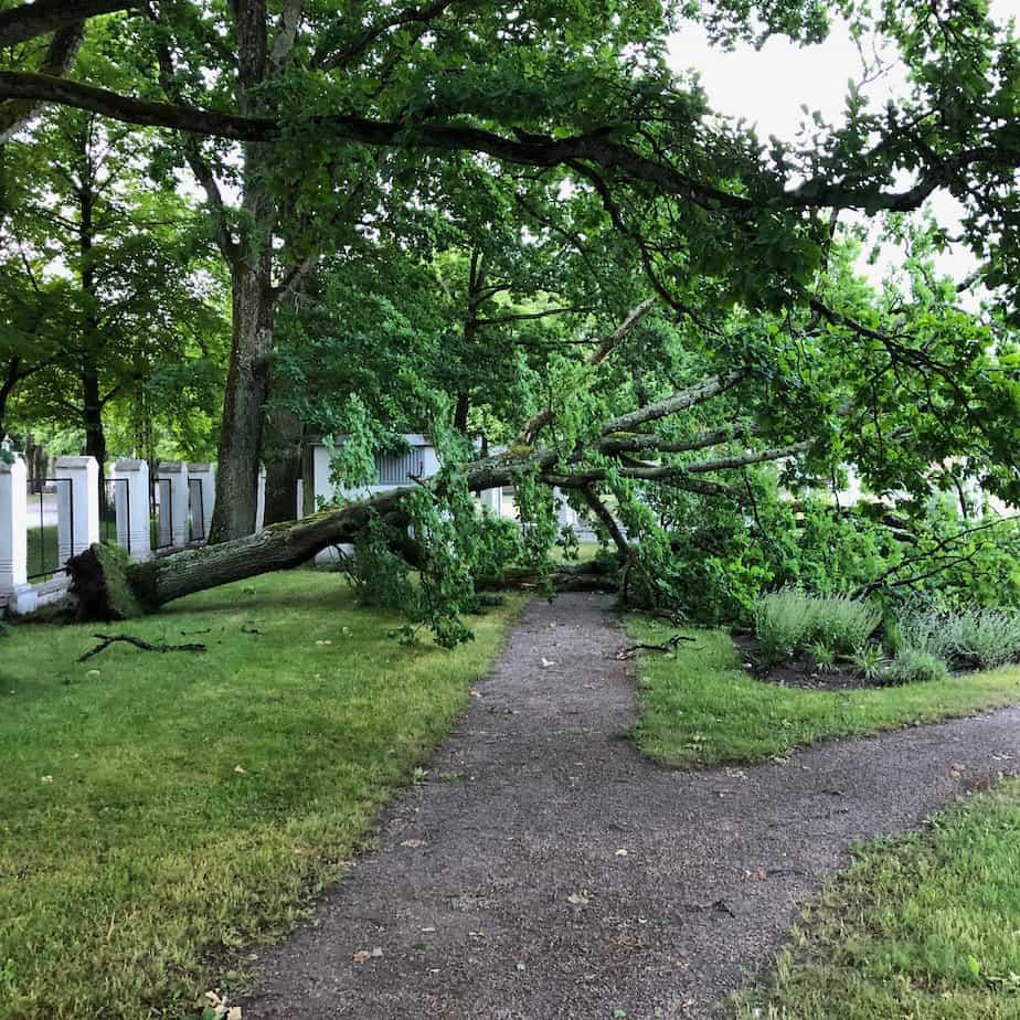 Ohtlik puu – Kuidas seda ära tunda?