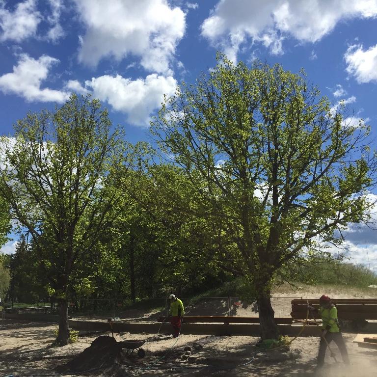 Puude erihooldustööd