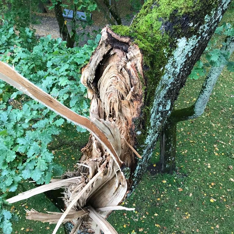 Ohtliku puu langetamine Pärnus