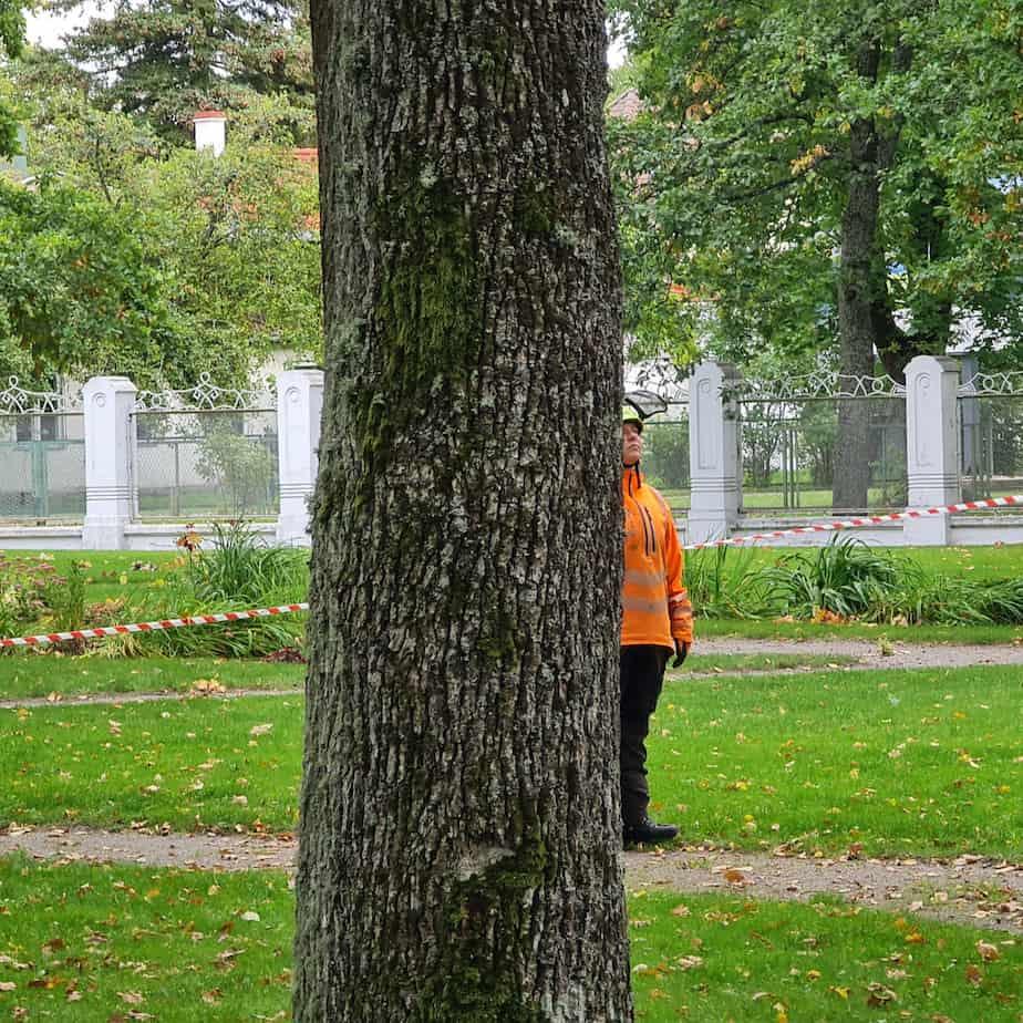 Anne-Mari Tilk - Arboristi abiline