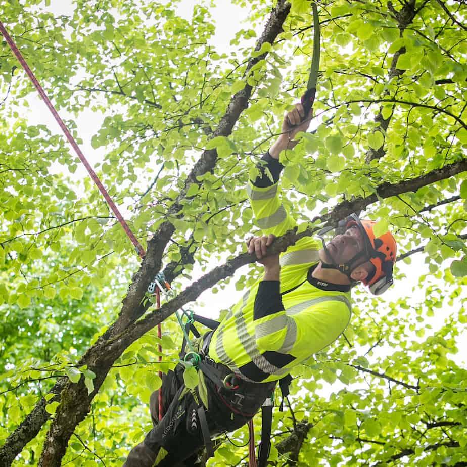 Arborist Arne Oad