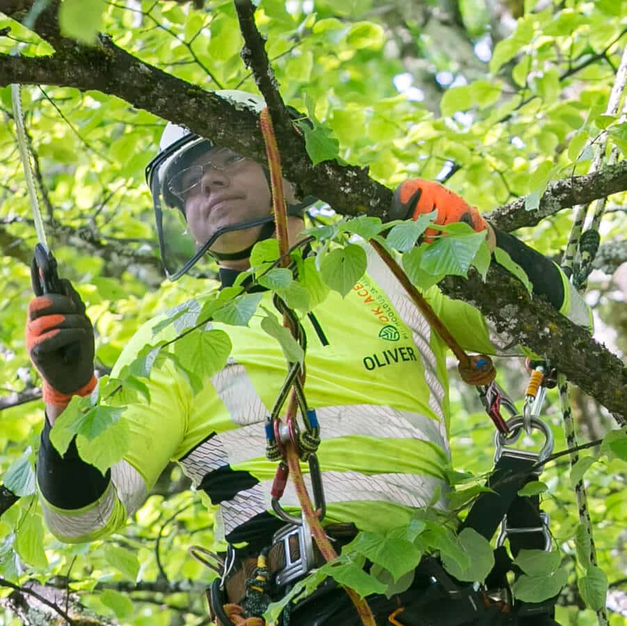 Arborist Oliver Haav