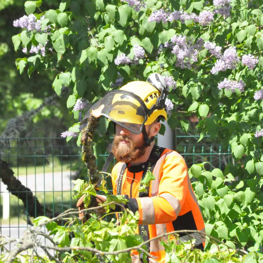 Stener Tiits - Arboristi abiline