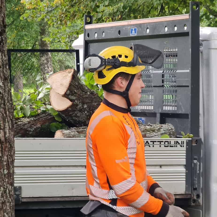 Taavi Tammekivi - Arboristi abiline