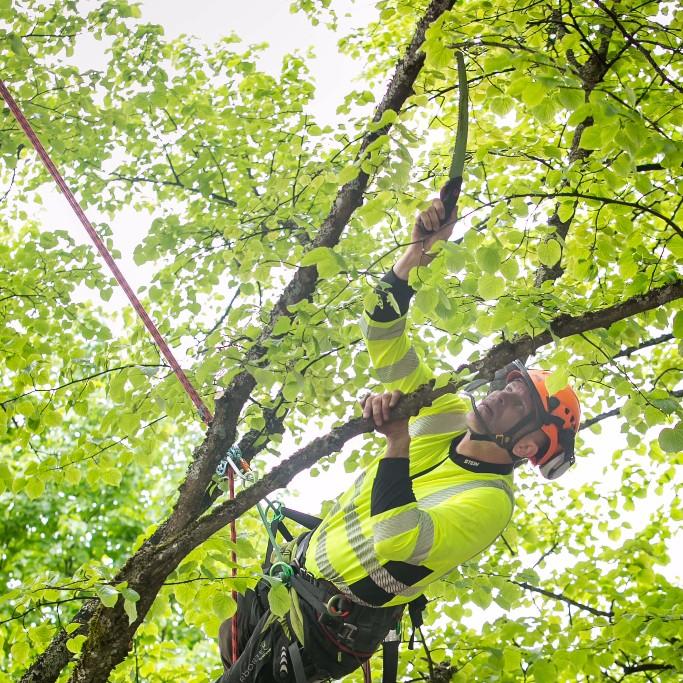 Puude säilituslõikus