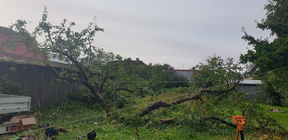 Õunapuu harude kokku tõmbamine