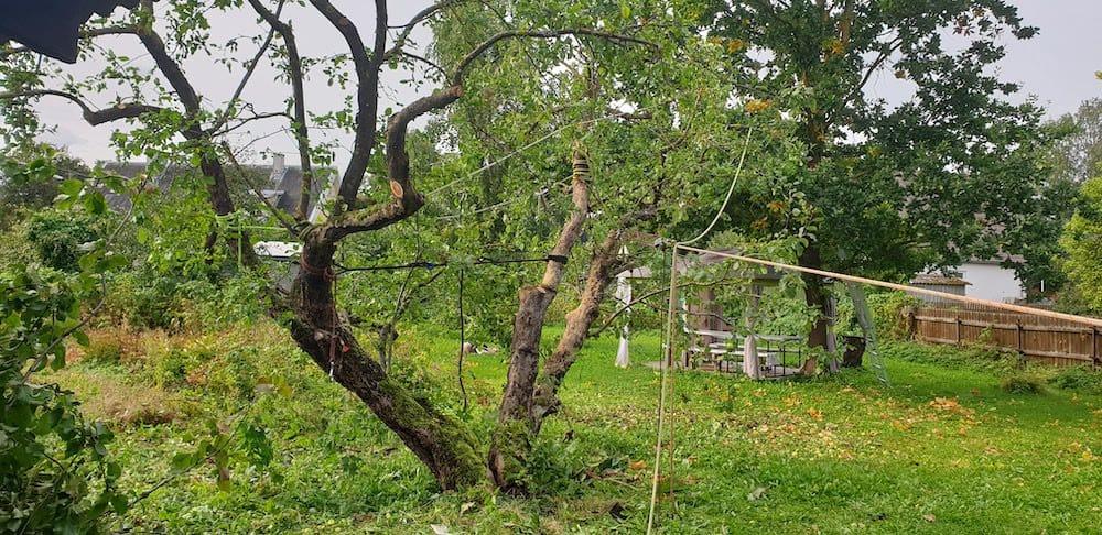 Õunapuude hooldamine