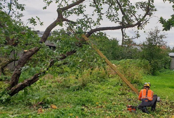 Õunapuu renoveerimine