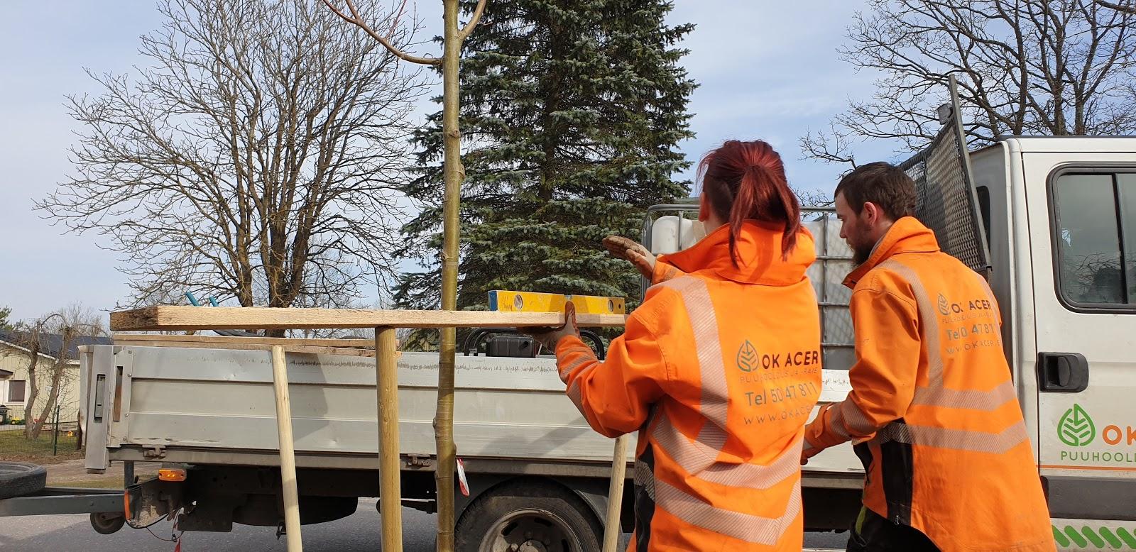 Puude istutamine: 6 soovitust, mis aitavad istikul hästi kasvama minna